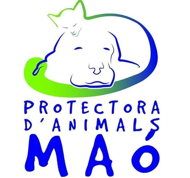 Protectora d'animals de Maó – Local i Fires